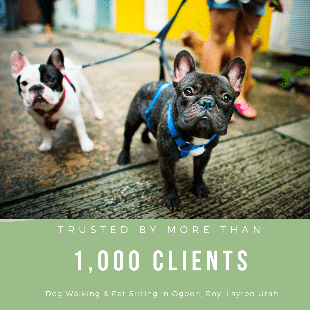 We Now Have Over 1,000 Clients!