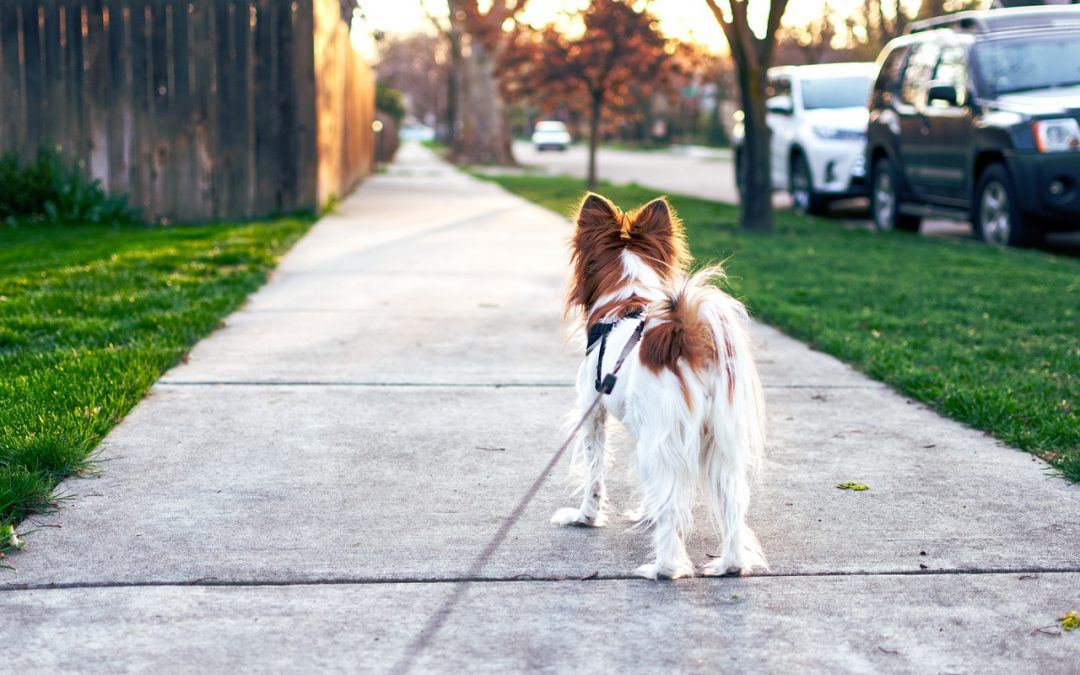 What You Need to Know Before Walking Your Dog in the Summer