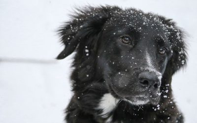 Winter Pet Safety Advice
